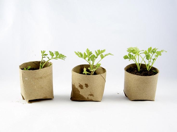 Toilet_paper_seedlings