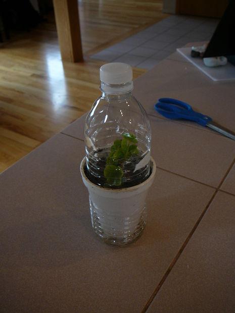 mini_greenhouse