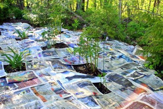 newspaper_mulch